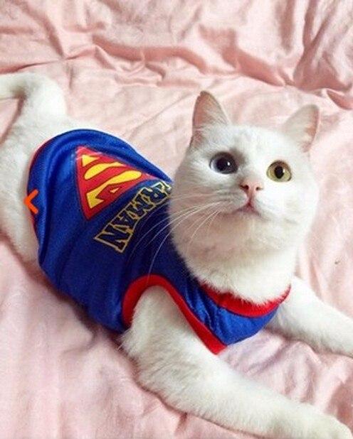 Накидка супермен для кота