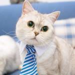 Котогалстук