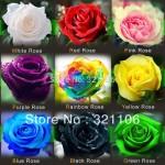 Семена различных сортов роз