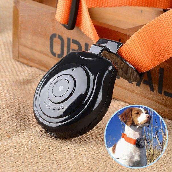 Камера для домашних животных