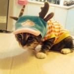Одежда оленя для кошек и собак