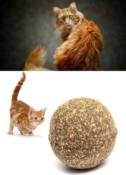 Шарик из кошачьей мяты