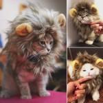 Львиная грива для кошек